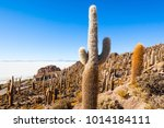 very big cactuses on cactus...   Shutterstock . vector #1014184111