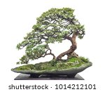 chinese old bonsai | Shutterstock . vector #1014212101