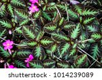 pattern of green leaves and... | Shutterstock . vector #1014239089