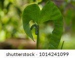 Small photo of worm.worm.Stem with leaf. Worms eat. Heart of leaves.