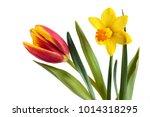 Bright Spring Yellow  Daffodil...