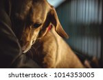 scared small yellow dog sitting ... | Shutterstock . vector #1014353005