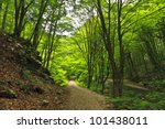 green foliage in forest in... | Shutterstock . vector #101438011