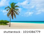 palm tree on the idyllic white... | Shutterstock . vector #1014386779