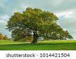 big oak tree in an english... | Shutterstock . vector #1014421504