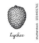 ink sketch of lychee fruit....   Shutterstock .eps vector #1014431761