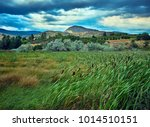 amazing field of cattails and... | Shutterstock . vector #1014510151