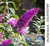 beautiful decorative  pink...   Shutterstock . vector #1014550789