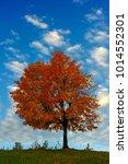 image of single tree against...   Shutterstock . vector #1014552301