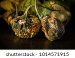 decaying gourds. end of life ... | Shutterstock . vector #1014571915
