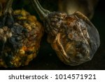 decaying gourds. end of life ... | Shutterstock . vector #1014571921
