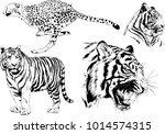 vector drawings sketches... | Shutterstock .eps vector #1014574315