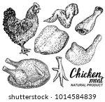 chicken meat set of vector hand ... | Shutterstock .eps vector #1014584839