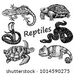 set of hand drawn reptiles... | Shutterstock .eps vector #1014590275
