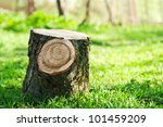 Stump On The Green Grass In Th...