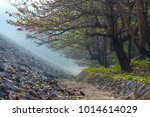 terminalia catappa tree in... | Shutterstock . vector #1014614029