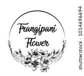 sketch vector of frangipani...   Shutterstock .eps vector #1014696694