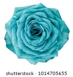 rose  turquoise flower  on... | Shutterstock . vector #1014705655