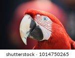 the parrot rozachka   Shutterstock . vector #1014750265
