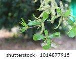 background blur green leaf