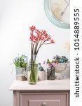 jatropha podagrica is a species ... | Shutterstock . vector #1014889555