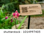 spathoglottis plicata blume... | Shutterstock . vector #1014997405