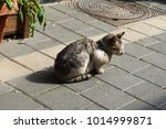 dirty street cat  tel aviv | Shutterstock . vector #1014999871