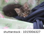 the kitten nuzzled | Shutterstock . vector #1015006327