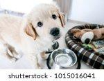 cute golden retriever puppy ... | Shutterstock . vector #1015016041