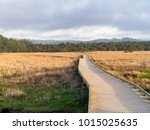 wooden footpath in a grassy... | Shutterstock . vector #1015025635