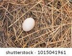 natural woven straw bird nest... | Shutterstock . vector #1015041961