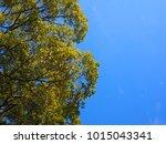 tree blue sky  tree top against ... | Shutterstock . vector #1015043341
