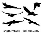 set of realistic vector... | Shutterstock .eps vector #1015069387