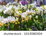 potted orchid on the counter in ... | Shutterstock . vector #1015080304