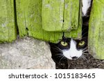 curious small cat with green... | Shutterstock . vector #1015183465