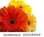 bouquet of flowers gerberas... | Shutterstock . vector #1015194319