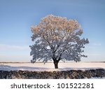 Winter Landscape. Tree With...
