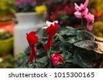 flowers at light leak . image... | Shutterstock . vector #1015300165