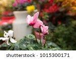 flowers at light leak . image... | Shutterstock . vector #1015300171