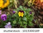 flowers at light leak . image... | Shutterstock . vector #1015300189
