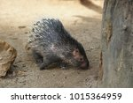 portrait of cute porcupine. the ... | Shutterstock . vector #1015364959