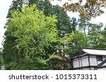 fresh green of japanese garden  | Shutterstock . vector #1015373311