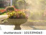 watering spraying a blooming... | Shutterstock . vector #1015394065