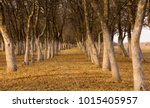 autumn landscape. withered... | Shutterstock . vector #1015405957