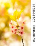 Small photo of Flower under sunlight, blurred background and bright meadow brighten the morning.