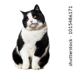 mixed breed cat sitting against ...   Shutterstock . vector #1015486171