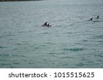 bay of islands  new zealand | Shutterstock . vector #1015515625