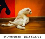 Beautiful Cat Stretching  Yoga...