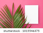 tropical palm tree leaf on a... | Shutterstock . vector #1015546375