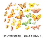 many butterflies isolated on... | Shutterstock . vector #1015548274